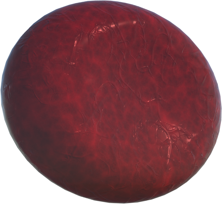 Red Blood Cell Model